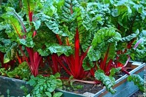 3 zöldség, amit ősszel is vethetünk és még tél előtt szüretelhetünk