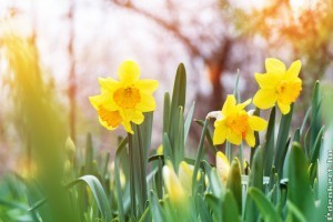 Ősszel ültesd el ezeket a növényeket, hogy kora tavasszal virágba boruljon kerted!