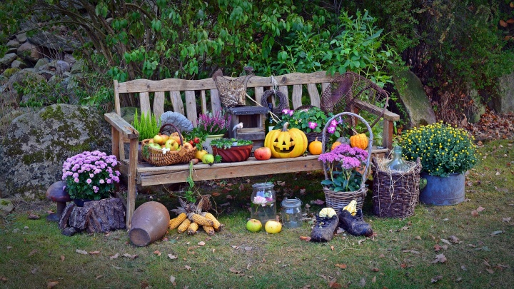 harvest-1642438_1920