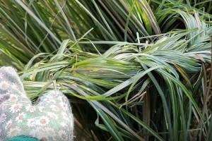 Pampafű, díszfű fonása házilag videóval
