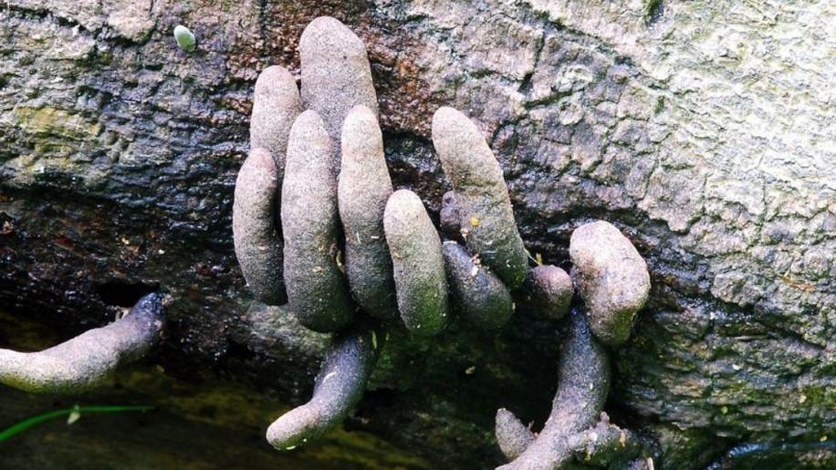 Halloween a természetben: halott ember ujjairól kapta a nevét ez a gomba
