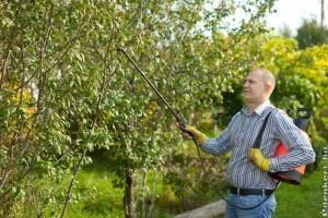 Így készítsük fel a gyümölcsfákat és a szőlőt a télre!