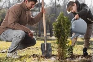 Hogyan telepítsd a fákat és a cserjéket ősszel?