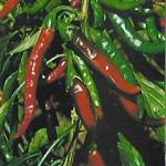 Permetezőszerek fűszernövényekből