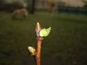 Közeleg a tél vége a kertben