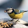 Itt a tél, a madáretetés ideje