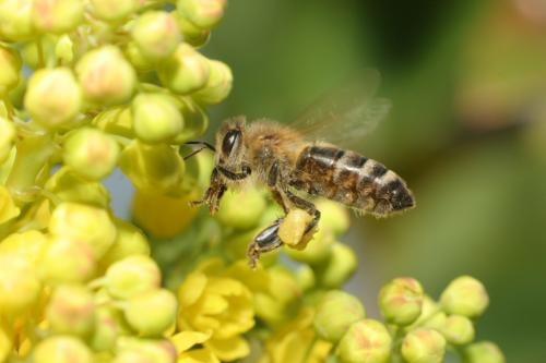 Mit eszünk a mézen? Édes bevezetés
