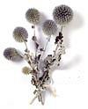 Szárazvirágok: könnyen kezelhető virágokat mutatunk