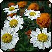 Légy a virágom! Virágportrék