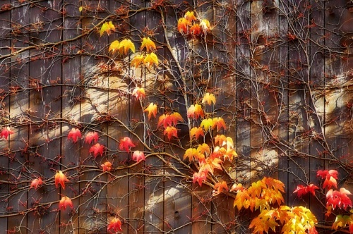 autumn-663998_640