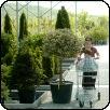 Faiskolák fukar kertészeknek
