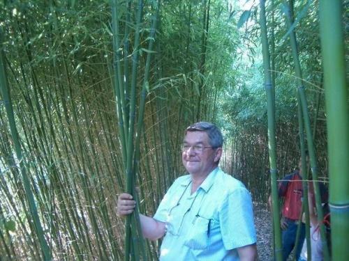Bambusznád csemetekert, ültetvény-iskola működtetése - dr. Szabó László