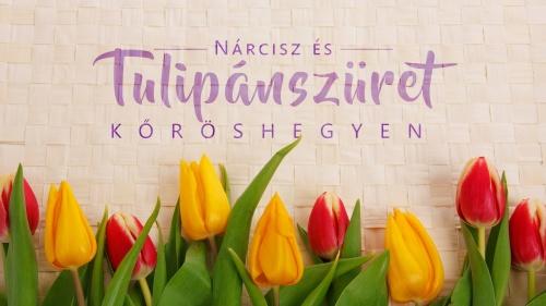 tulipszuret