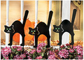 cat-halloween-products_19_120