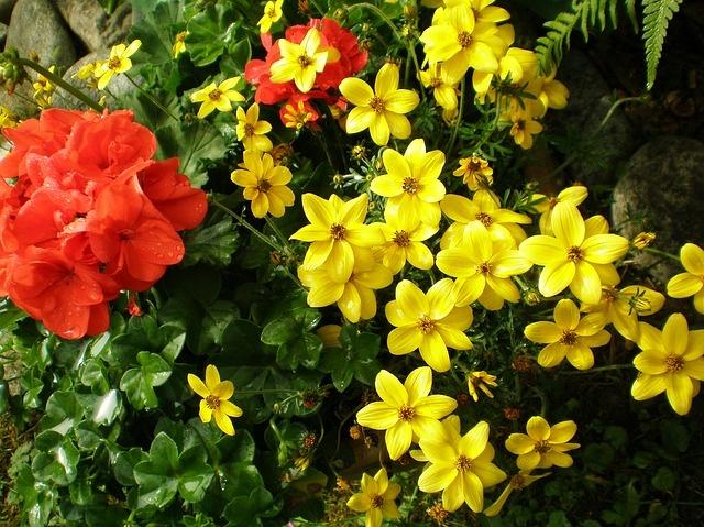 flowers-1999465_640