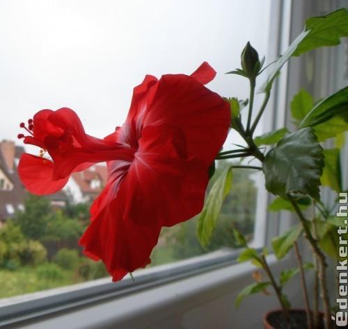Gyönyörű virágom