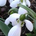 Várjuk a tavaszt