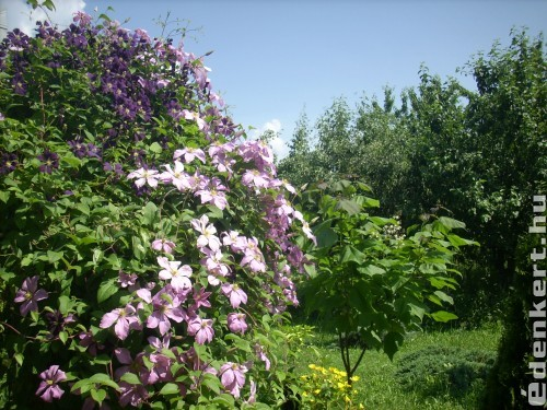Tájkép kertről és a nyárról.