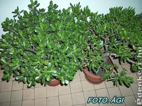 Zöld növények