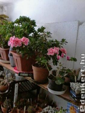 Virágzás a teleltetőben