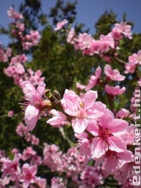 Virágözön az őszifán