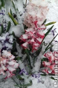 Áprilisi tél