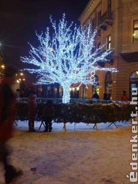 Jégfa Debrecenben