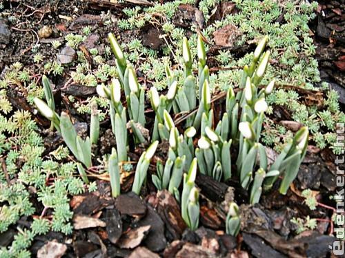 Ez már a tavasz jele!