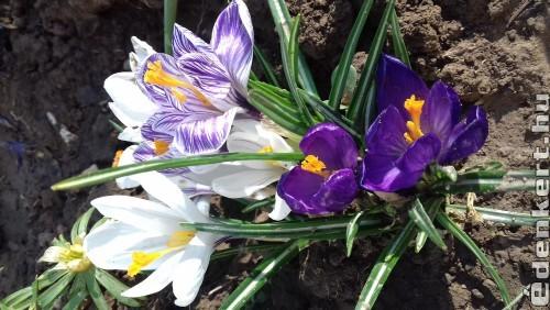 Tavasz váró