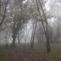 reggeli fák