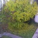 őszi fotó