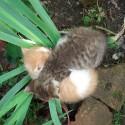 Cica hűsölés
