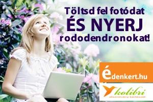 fotjtk_rododendron_300x200_130620