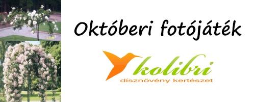 oktoberi-fotojatek-edenkert